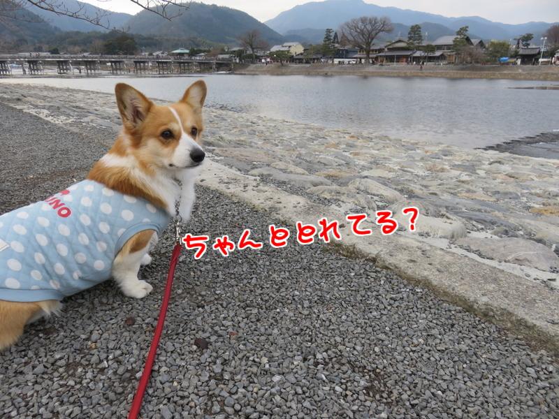 渡月橋撮影4