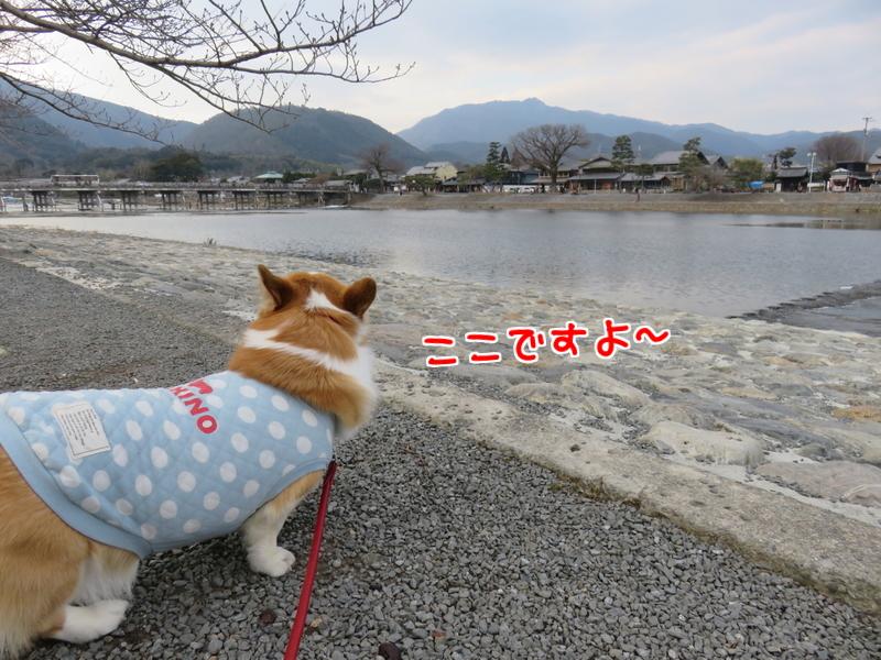 渡月橋撮影3