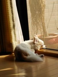 日向ぼっこ