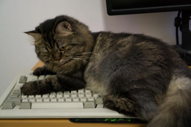 Mechanical_Keyboard66_98.jpg