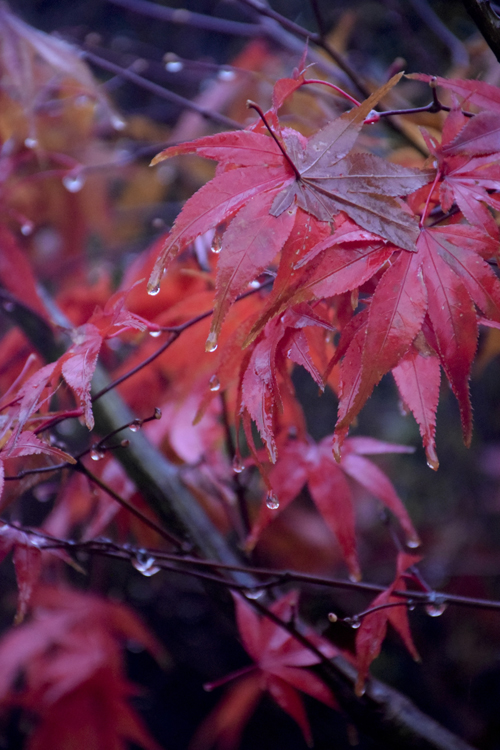 colored_leaves_15_12_11_3.jpg