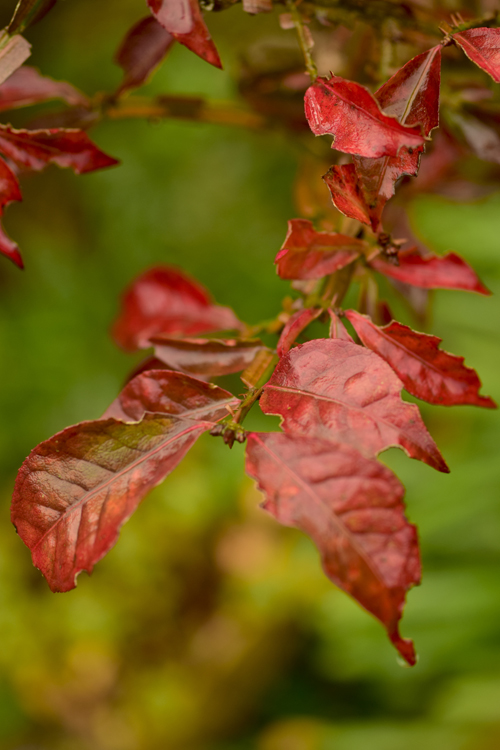 colored_leaves_15_12_11_4.jpg