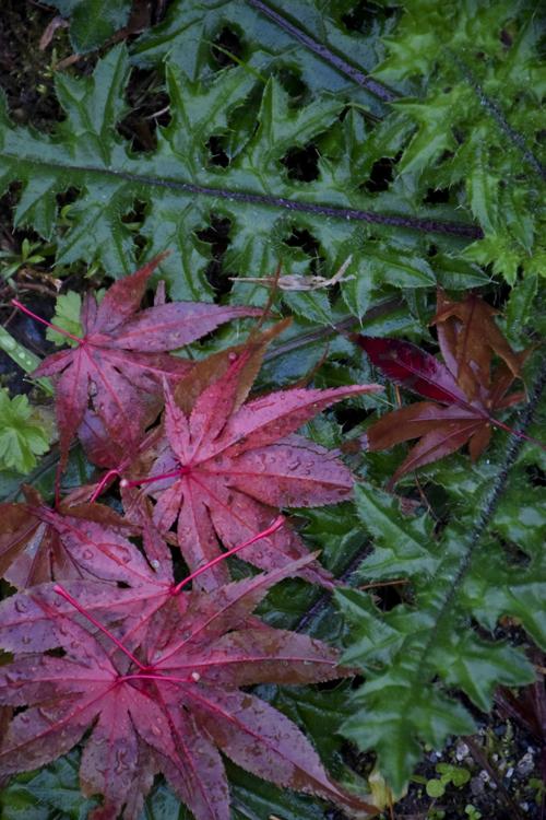 fallen_leaves_15_12_11_1.jpg