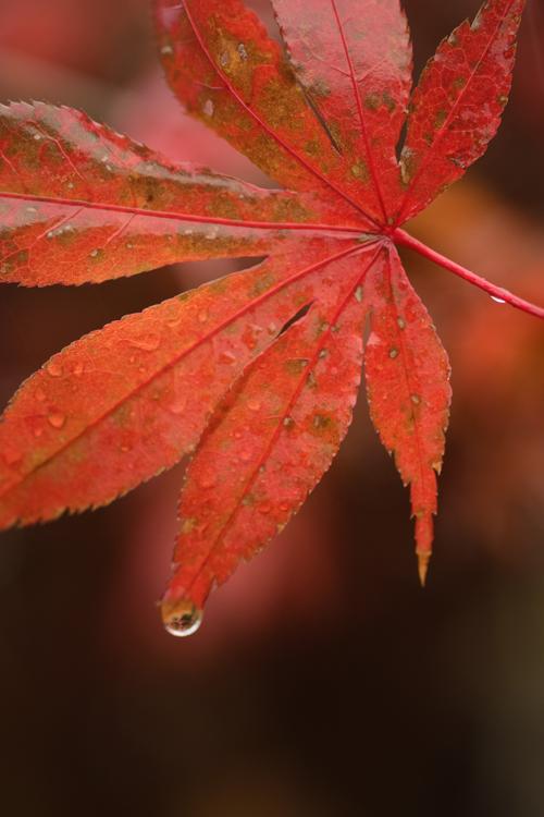 fallen_leaves_15_12_11_3.jpg