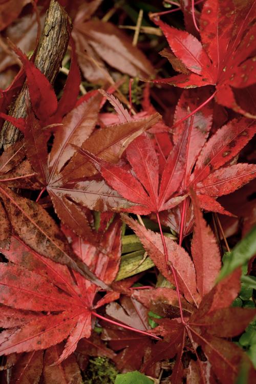 fallen_leaves_15_12_11_4.jpg