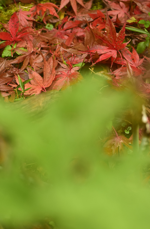 fallen_leaves_15_12_11_5.jpg