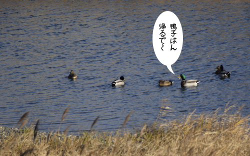 magamo_15_12_29_1.jpg