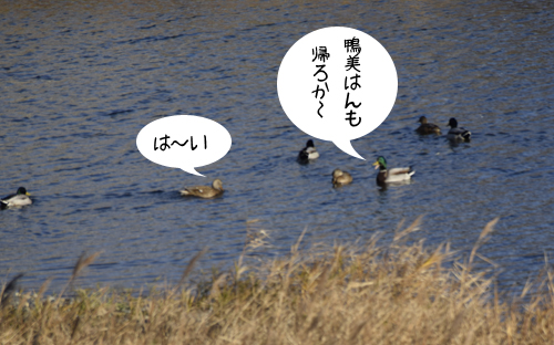 magamo_15_12_29_3.jpg