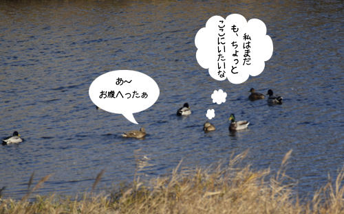 magamo_15_12_29_4.jpg