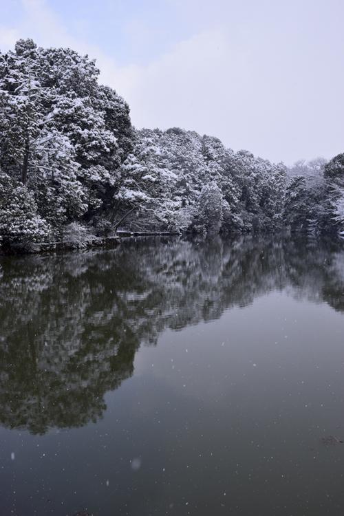 snow_pond_16_3_1_2.jpg