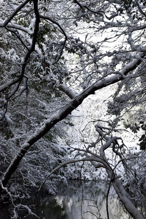 snow_pond_16_3_1_7.jpg