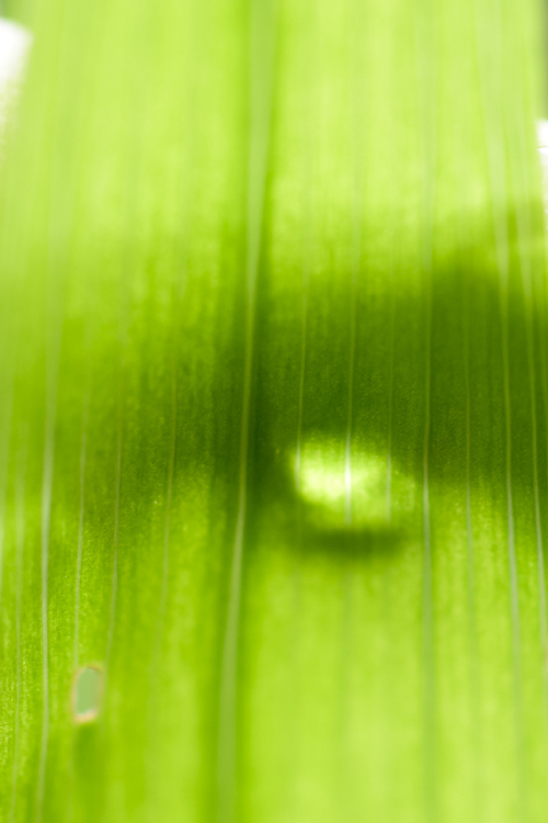 tulip_15_4_21_1.jpg