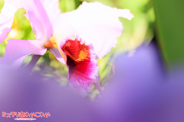 IMG_2639-2.jpg