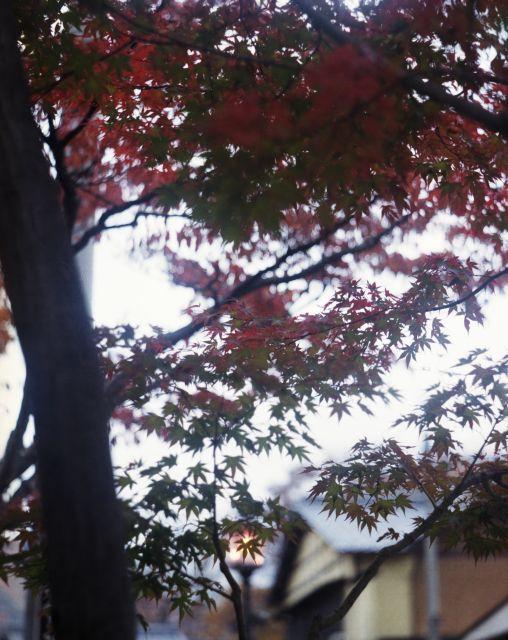 街の秋2015-06a