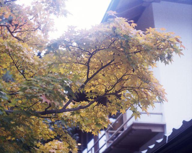 街の秋2015-08a
