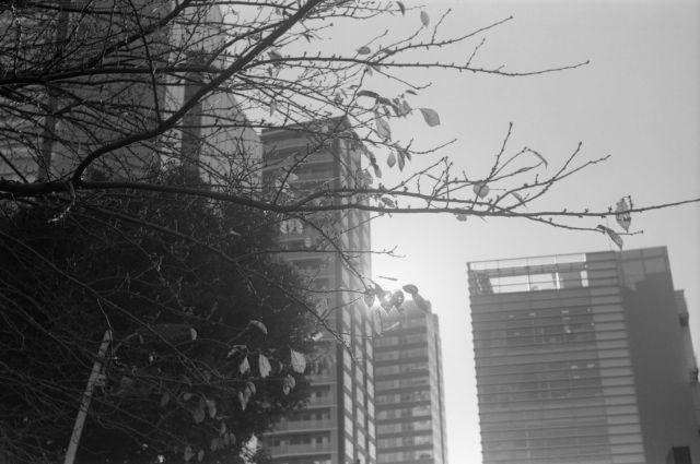 街の秋2015-15a