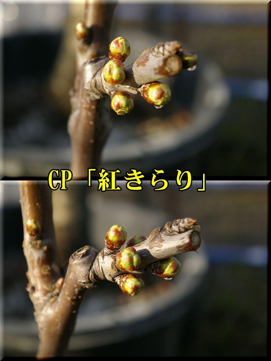 1CPbenikira160226_011.jpg