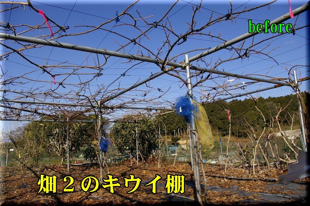 1H2kiui160216_007.jpg