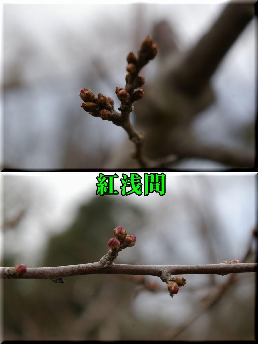 1beniasama160229_006.jpg