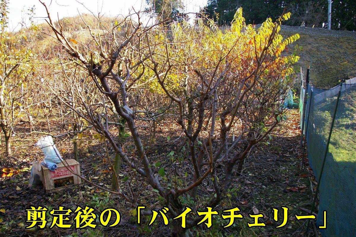 1biochery151215_001.jpg