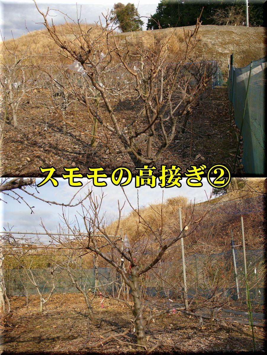 1biochery160121_004.jpg