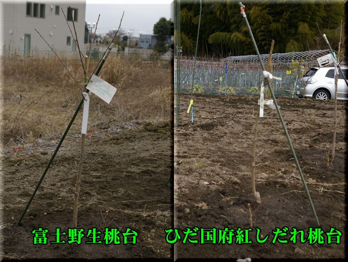1fujiyasei160212_002.jpg