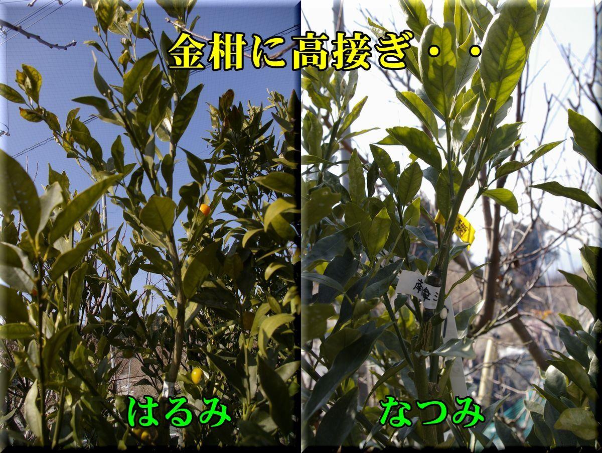 1har_nat160202_018.jpg