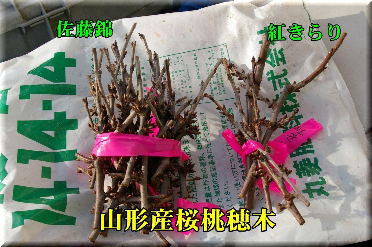 1hogi160122_001.jpg