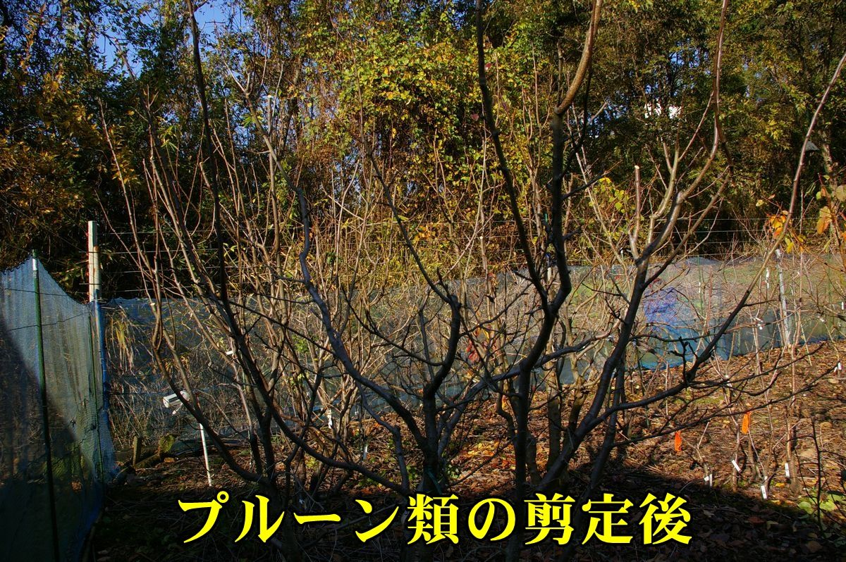 1jyoku151215_008.jpg