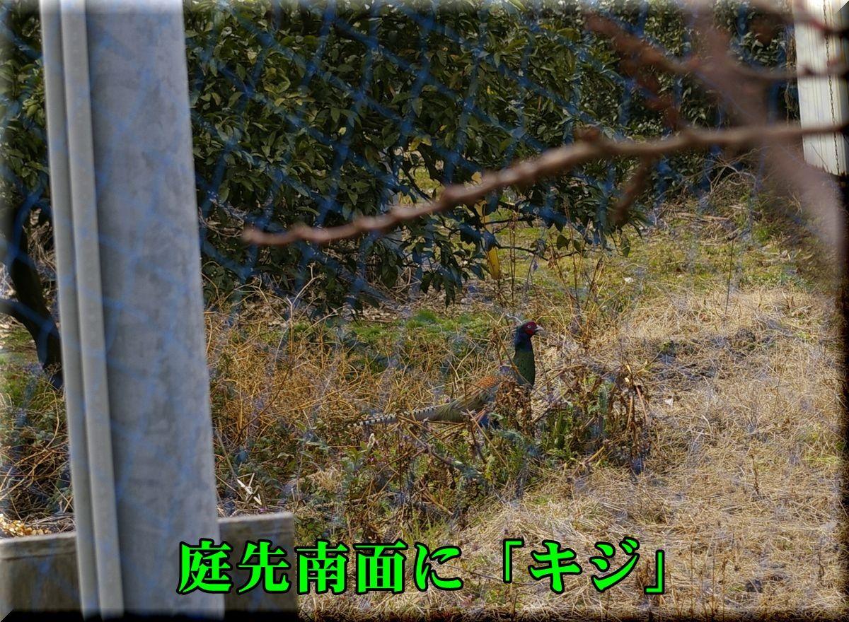 1kiji160229_023.jpg