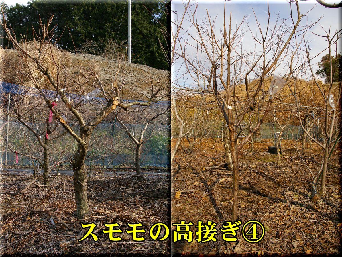 1kiyou160121_010.jpg