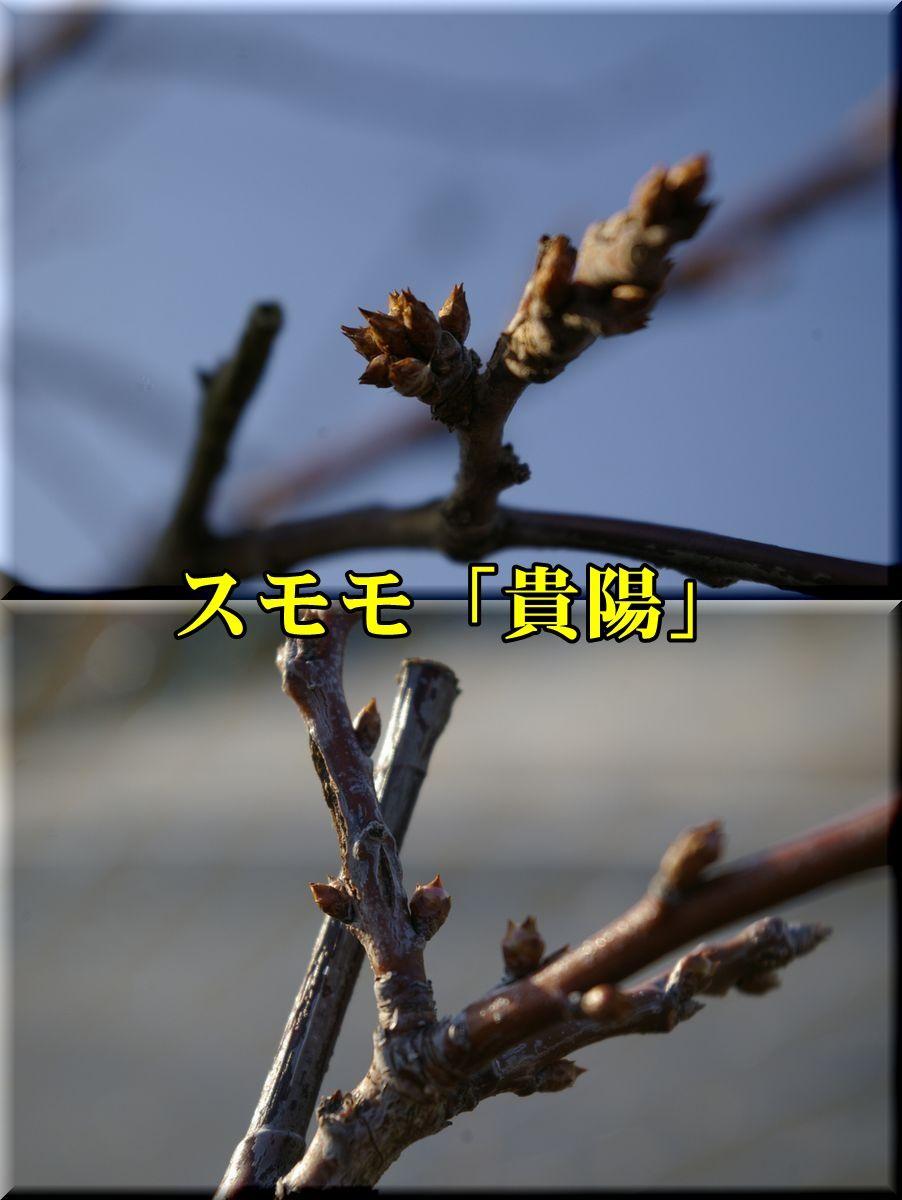 1kiyou160226_009.jpg