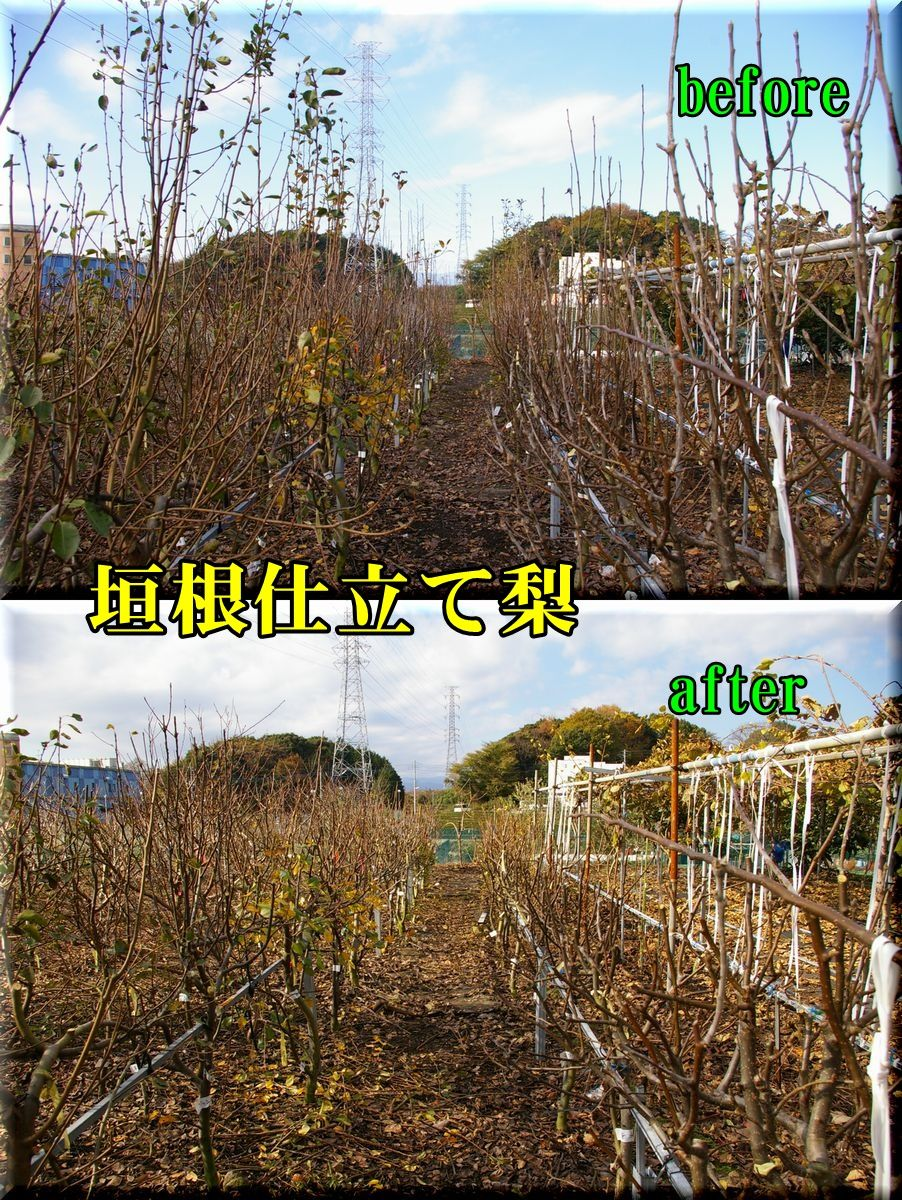 1nasi151220_001.jpg