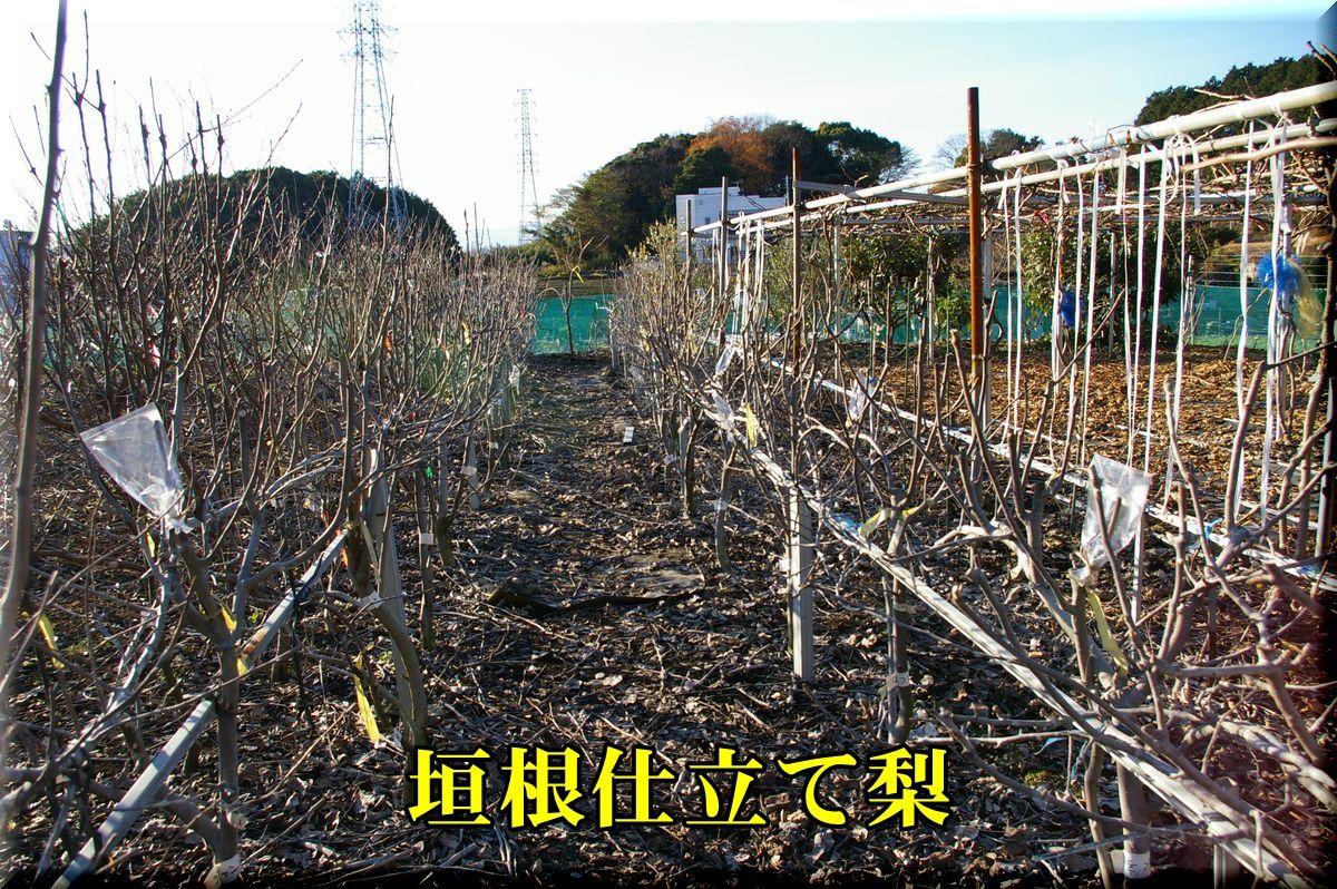1nasi160113_009.jpg