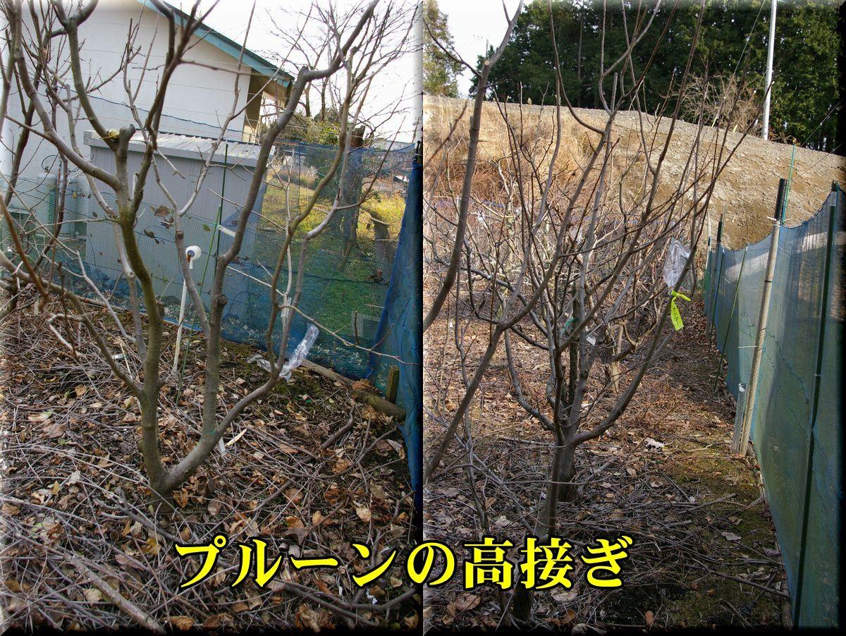 1purun160121_002.jpg