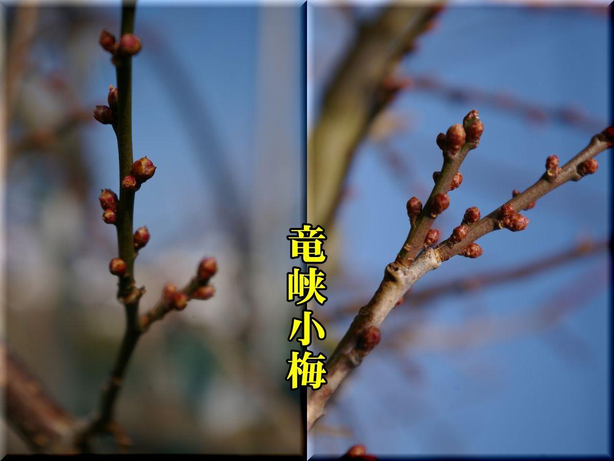 1ryukyou160103_014.jpg