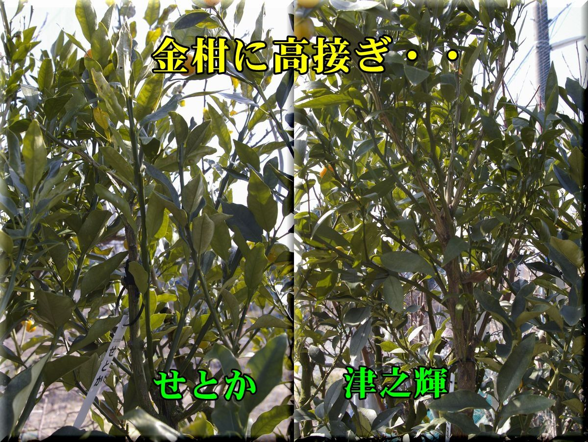 1set_tuno160202_023.jpg