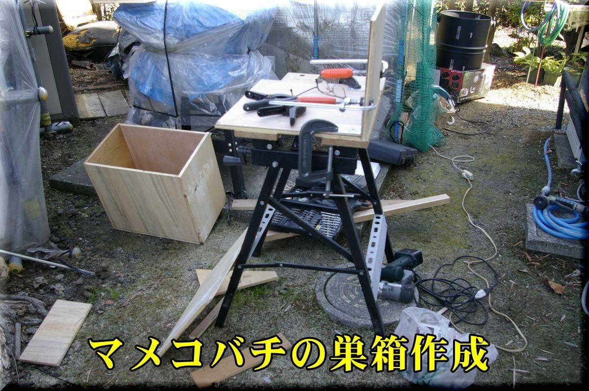 1subako160219_003.jpg