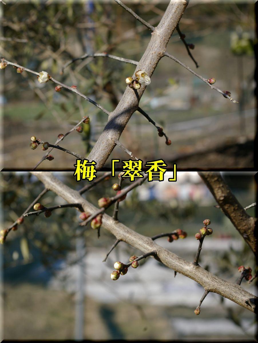 1suikou160127_009.jpg