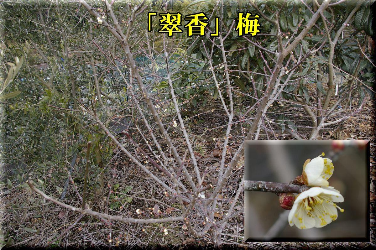 1suikou160131_017.jpg