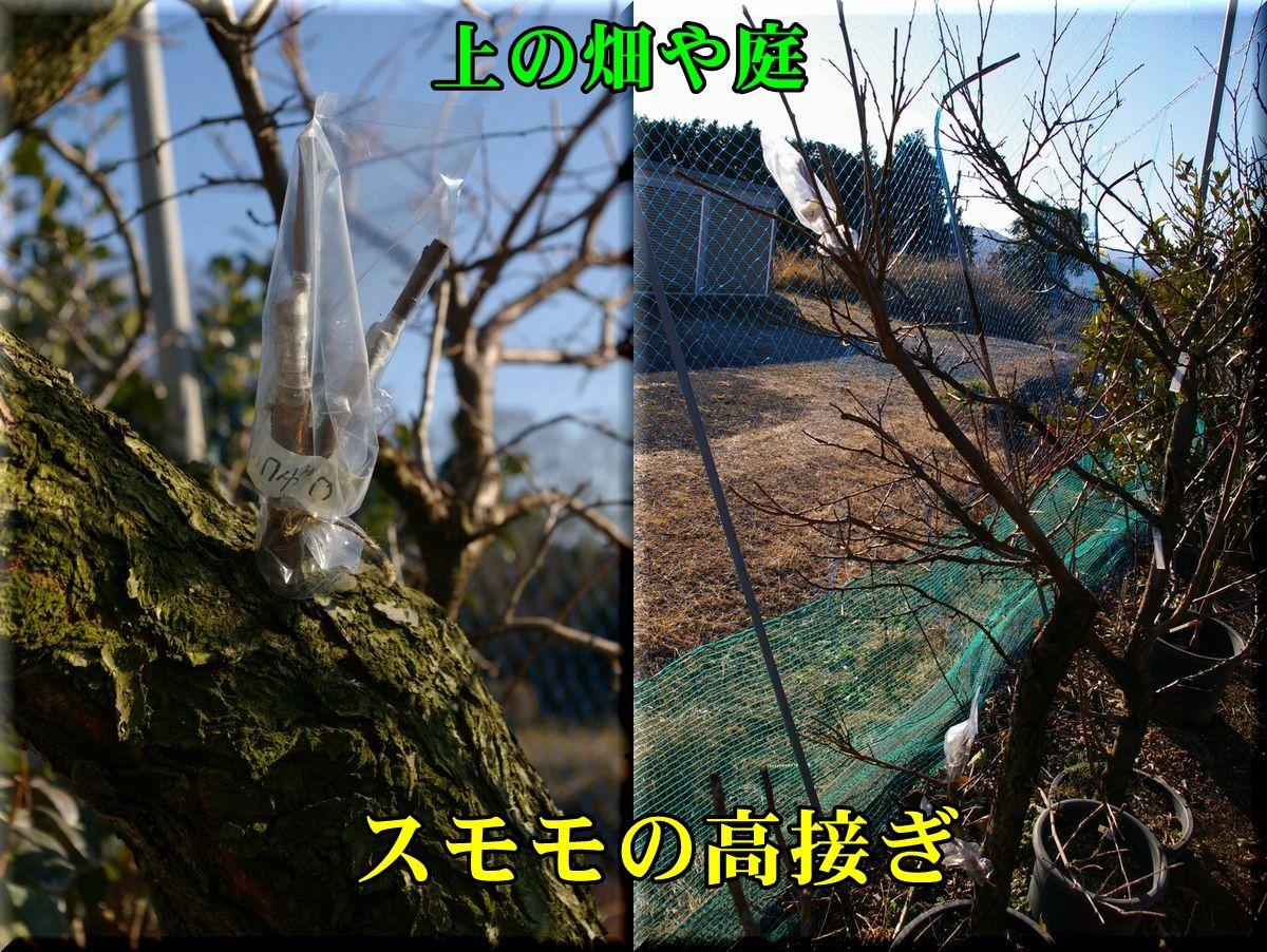 1sumomo160120_015.jpg