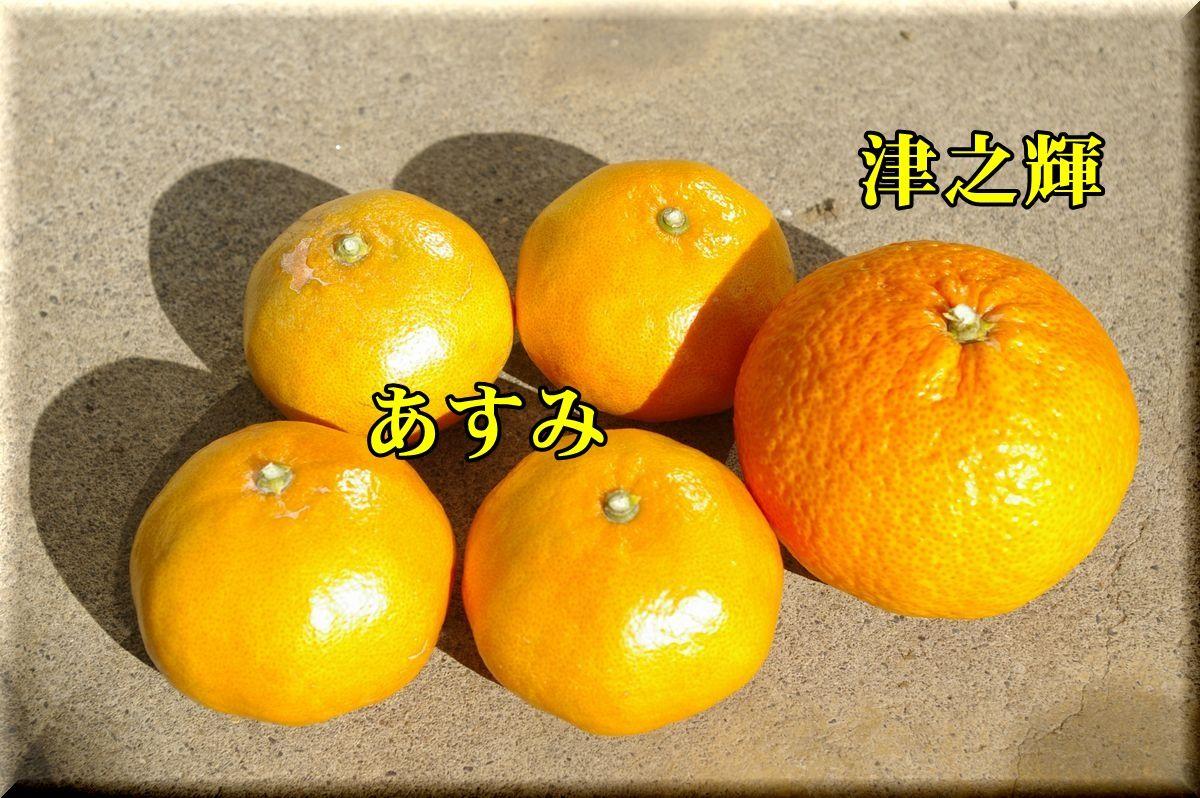 1tuno_asu160124_011.jpg
