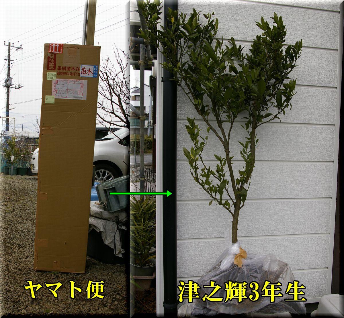 1yamato160206.jpg
