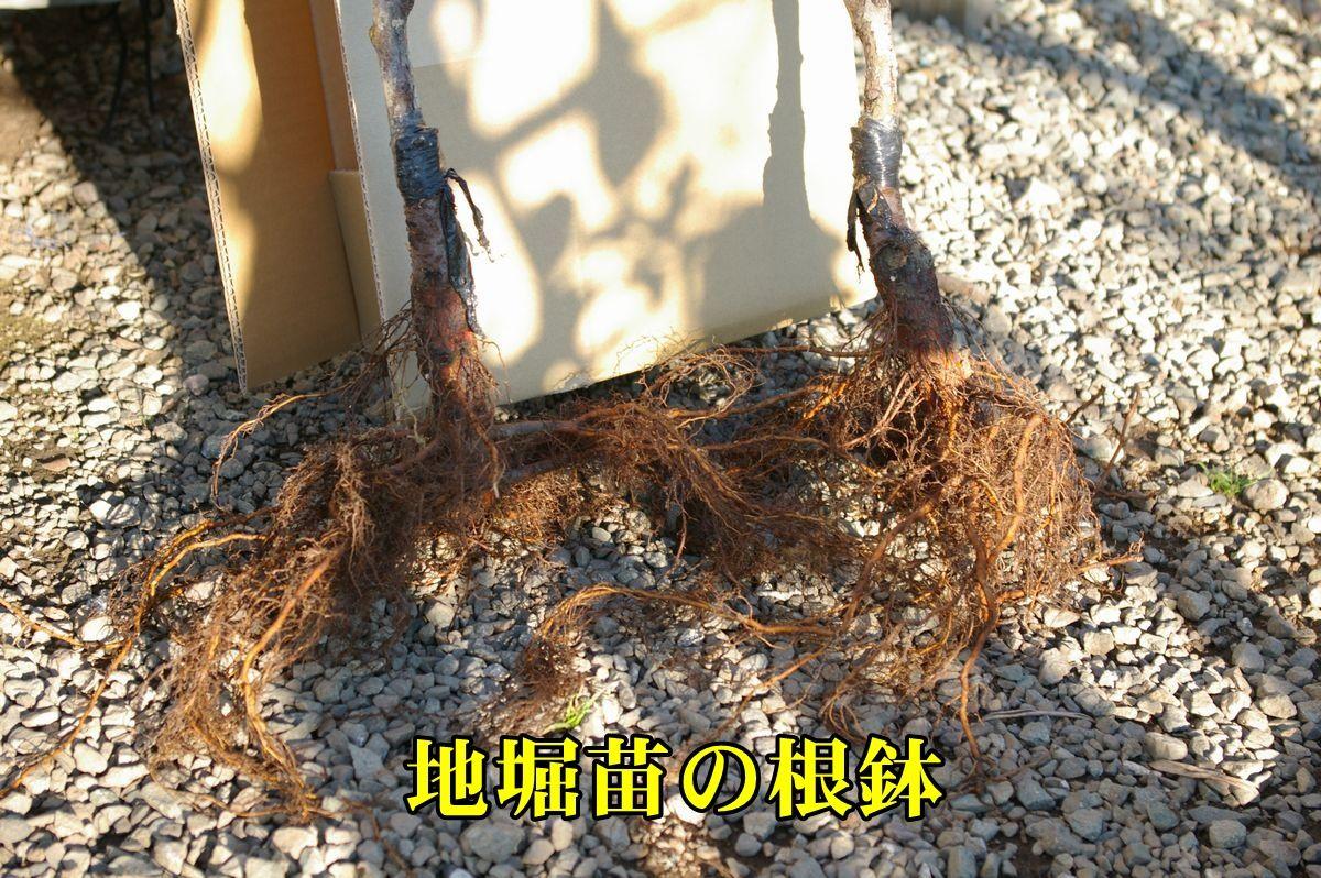 2kocheko151219_027.jpg