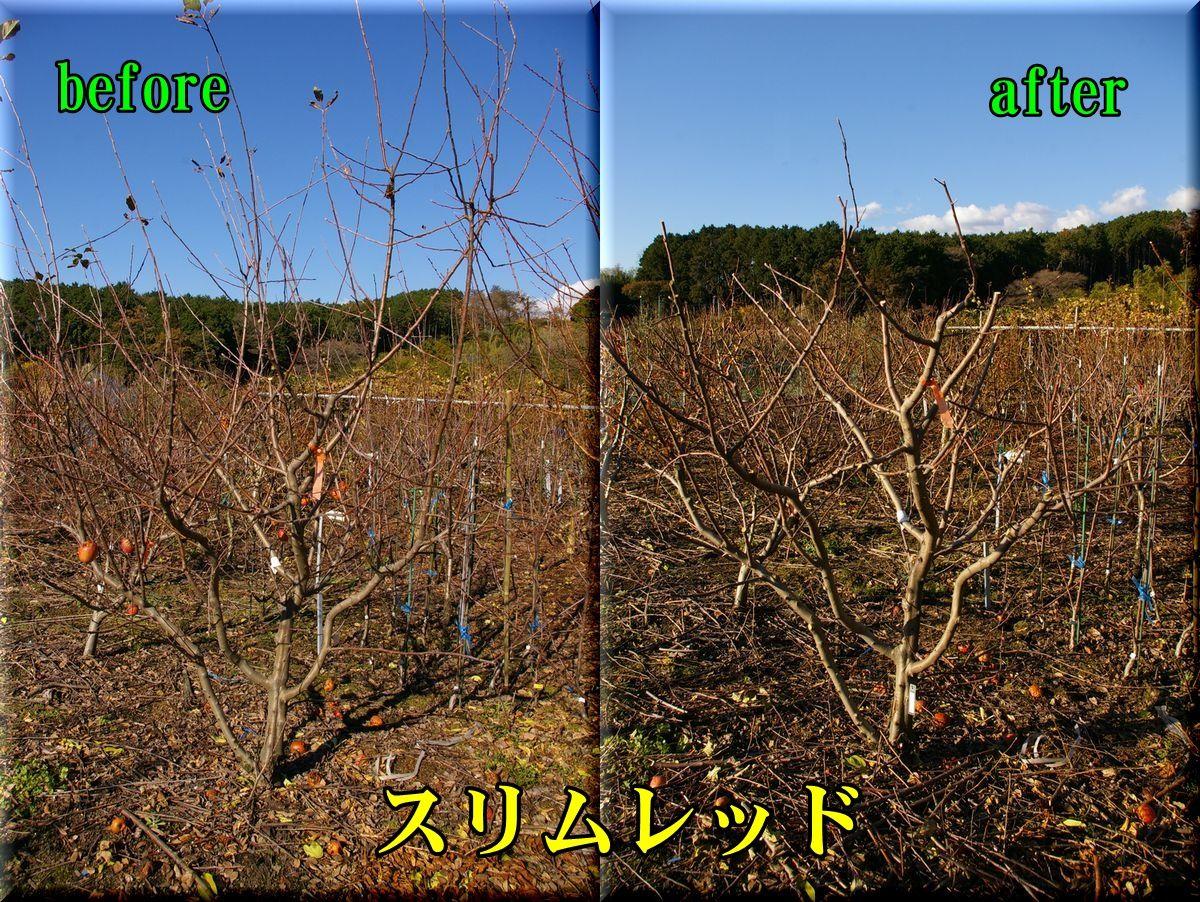 2slimred151219_011.jpg