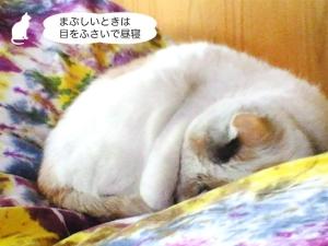 まぶしいときは目をふさいで昼寝