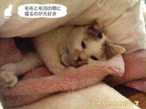 毛布と布団の間に寝るのが大好き