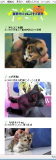 151229_cat.png