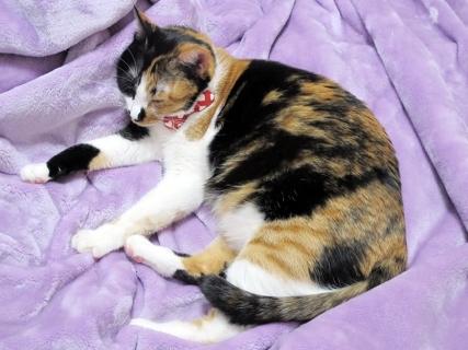 160107_cat04.jpg