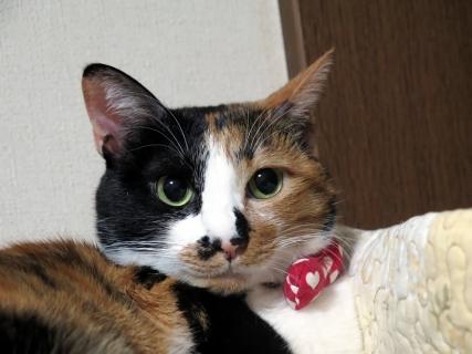 160107_cat05.jpg